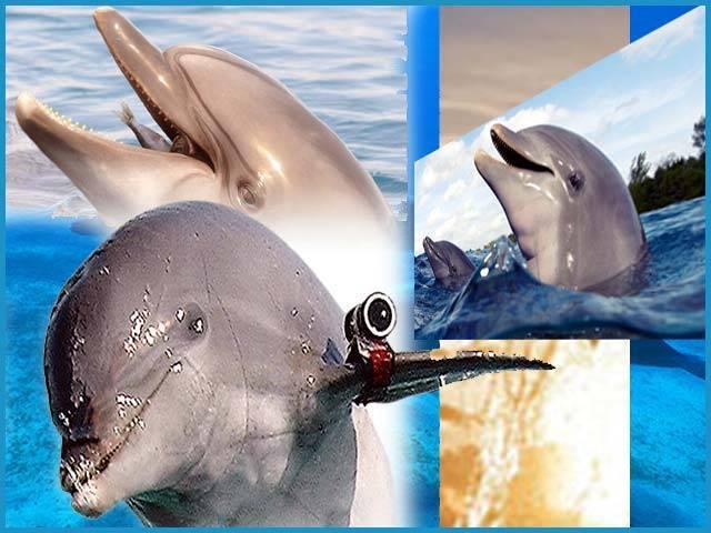 لو اب ڈولفن بھی اآپکی جاسوسی کریں گی !