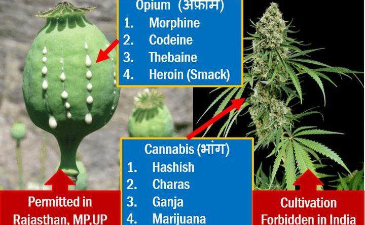 ملک میں افیون کی پیداوار کا چالیس فیصد رقبہ کم ہوجائے گا