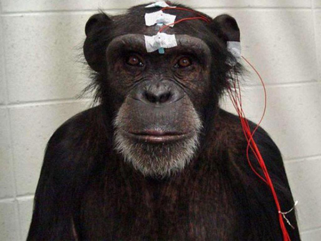 بندر کے دماغ میں معلومات براہ راست داخل کرنے کا کامیاب تجربہ