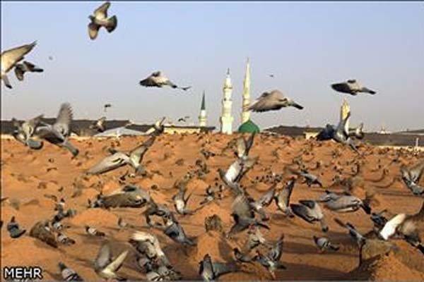 انہدام جنت البقیع کے خلاف اور مزارات مقدسہ کی تعمیر نو کے لئے مجلس علماء ہند کا احتجاجی مظاہرہ