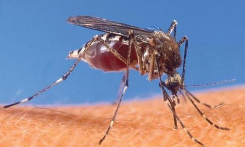 مچھروں کو دور بھگانے والے گھریلو نسخے