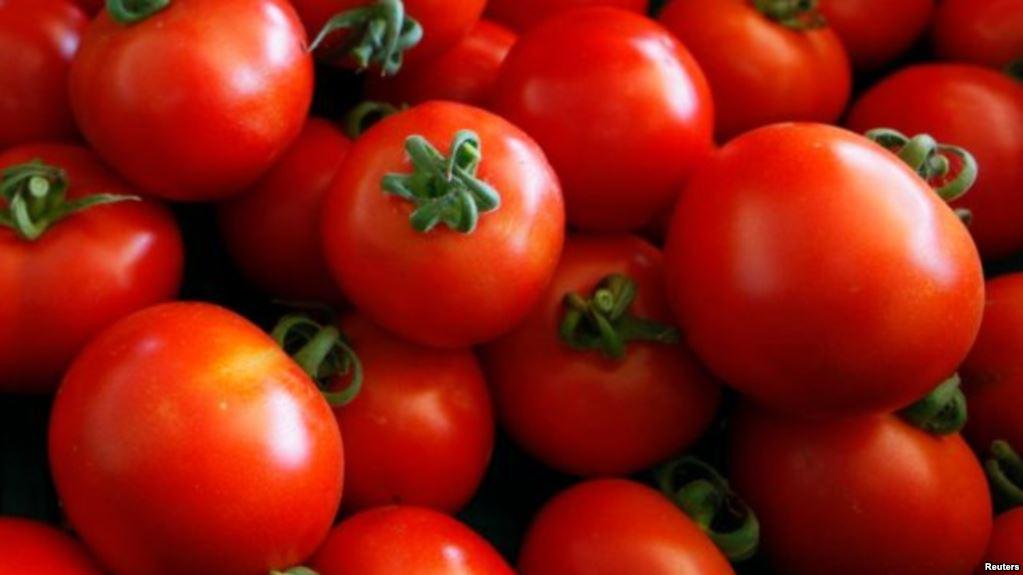ٹماٹر، رسیلے، مزیدار اور فائدے مند